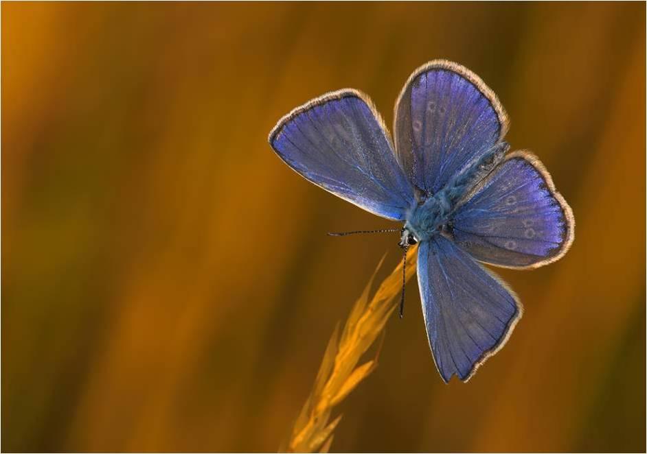 papillonfleur.jpg