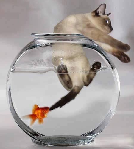 L'image du jour, pour sourire... dans Chemin cat-fish
