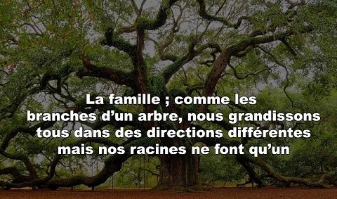 ARBRE ET FAMILLE-